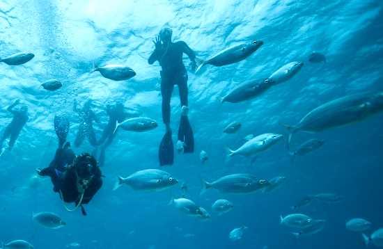 Buceo & Snorkel Corralejo Fuerteventura