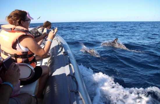 Avistaje de delfines y ballenas Morro Jable Fuerteventura