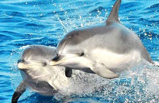 Delfín Catamarán Select Fuerteventura